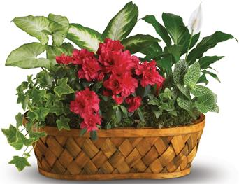 Plants Galore for flower delivery australia wide