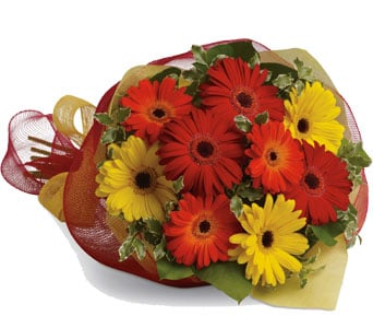 Gerbera Brights in Auburn , Flower Theme