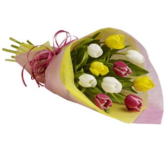 Tulip Treasure for flower delivery australia wide