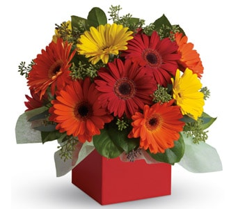 Glorious Gerberas in sinnamon park , petals florist network