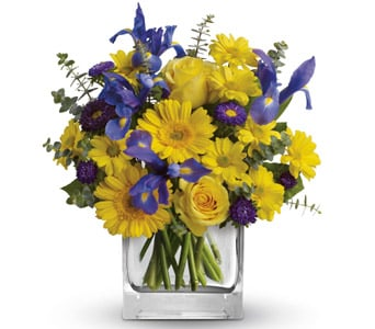Summer Breeze in Nowra , Hyams Nowra Florist