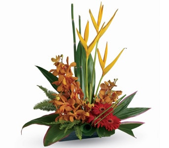 Tropical Splendour for flower delivery new zealand wide
