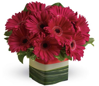 Grand Gerberas in sinnamon park , petals florist network