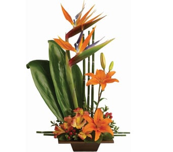 Exotic Grace for flower delivery new zealand wide