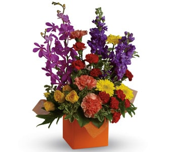 Surprise and Shine for flower delivery New Zealand wide