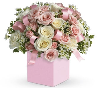 Celebrating Baby Girl in toorak , petals florist network