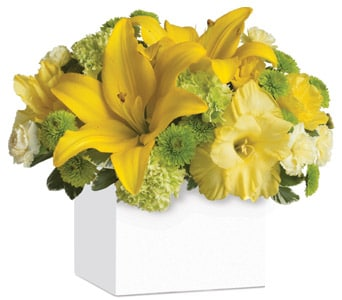 Burst of Sunshine in Clayton, Melbourne , Abbadeen Florist