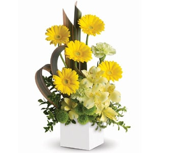 Sunbeam Smiles in kyabram , petals florist network