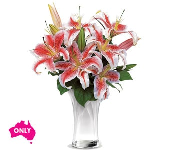 Celebrate Lilies for flower delivery australia wide