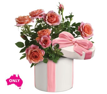 Hats Off to Rose - fast gift delivery australia wide