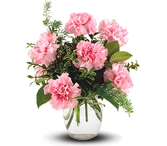 Pink Notion in Brisbane , Brisbane Online Florist