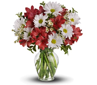 Dancing in Daisies in MILTON , MILTON VILLAGE FLORIST