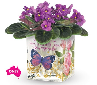 Enchanted Violet for flower delivery new zealand wide