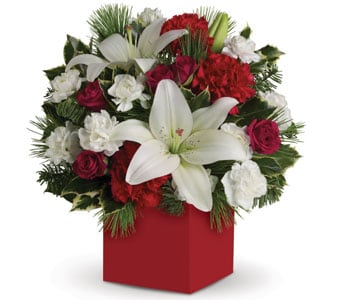 Christmas Carols for flower delivery new zealand wide