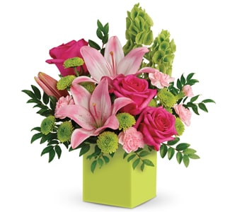 Show Mum You Care in Springwood, Blue Mountains , Mountain Mist Florist