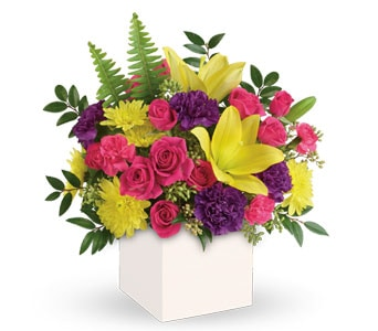 Vivid Delights for flower delivery new zealand wide