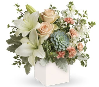Pedirka Sunrise in north gosford , petals florist network
