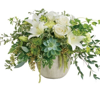 Tanami Beauty for flower delivery australia wide