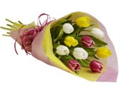 Tulip Treasure in south west rocks , south west rocks florist