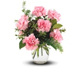 Pink Notion in springwood, blue mountains , mountain mist florist
