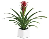 Bromeliad Beauty in collingwood , collingwood florist