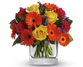 Citrus Splash in orange , pick me flowers and gifts