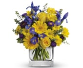 Summer Breeze in sunshine , silke p flowers of sunshine