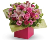 Softest Whispers for flower delivery new zealand wide