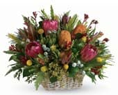 Tabulum in morwell , mid valley florist