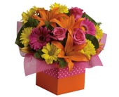 Starburst Splash in Orange , Classic Country Rose