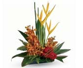 Tropical Splendour in edgecliff , edgecliff florist