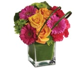 Party Girl in winston hills , colour on stem florist