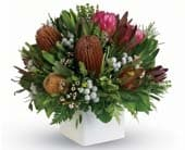 Nunkeri in north rockhampton , lakes creek florist