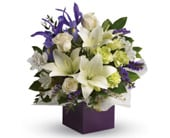 Graceful Beauty in dianella , florist works dianella