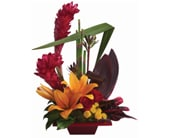 Tropical Bliss in orange , pick me flowers and gifts
