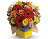 Garden Spectacle in orange , pick me flowers and gifts