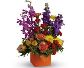Surprise and Shine in orange , jenisa florist & gifts