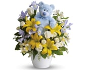 Cuddles for Him in hobart , florist works - hobart flowers