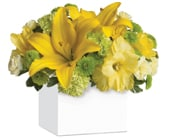 Burst of Sunshine in cannonvale , karen hill floral design