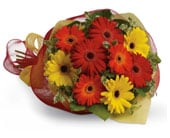 Gerbera Brights for flower delivery united kingdom wide