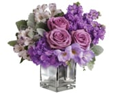 Lavender Mum in auburn , flower theme