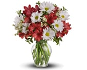 Dancing in Daisies in nowra , hyams nowra florist