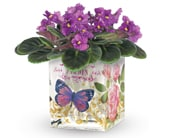 Enchanted Violet in orange , pick me flowers and gifts