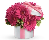 Hats Off to Daisy in coolangatta , coolangatta florist