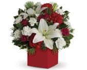 Christmas Carols in orange , pick me flowers and gifts