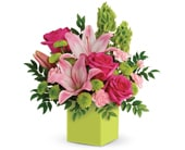 Show Mum You Care in orange , jenisa florist & gifts