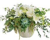 Tanami Beauty in toorak , petals florist network
