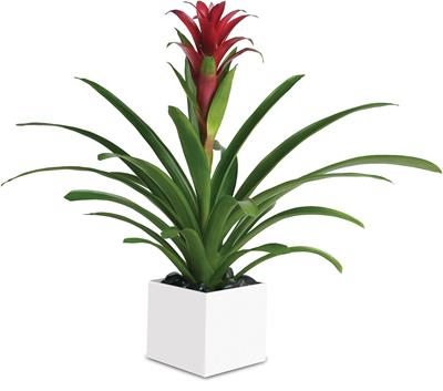 Bromeliad Beauty in Orange , Classic Country Rose