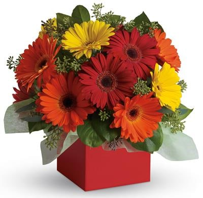 Glorious Gerberas in Winston Hills , Colour On Stem Florist