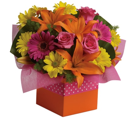 Starburst Splash in Brisbane , Brisbane Online Florist